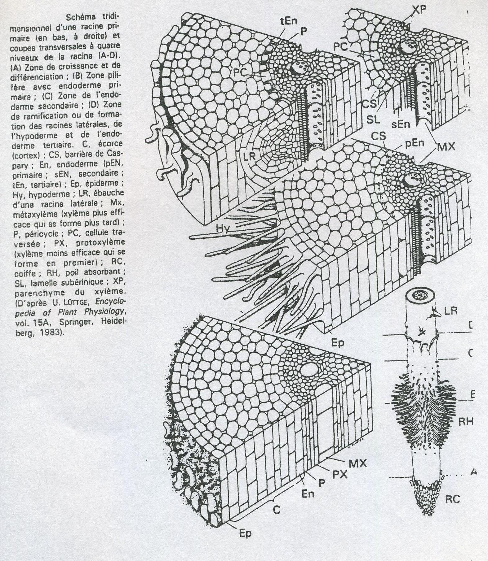 laracineschmaslgends038.jpg