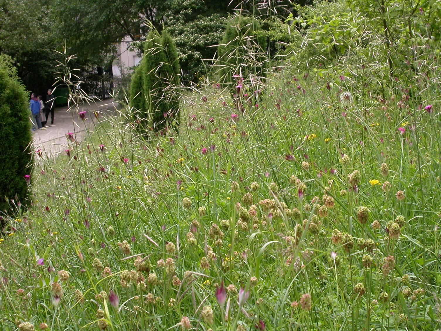 Botablog 2 menaces sur la biodiversit v g tale for Jardin naturel