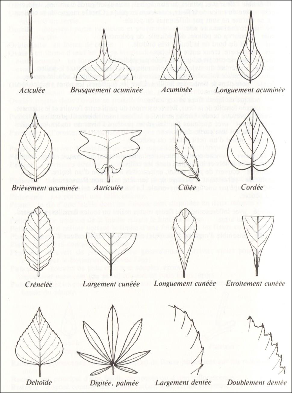 Botablog a appareil v g tatif - Appareil pour ramasser les feuilles ...