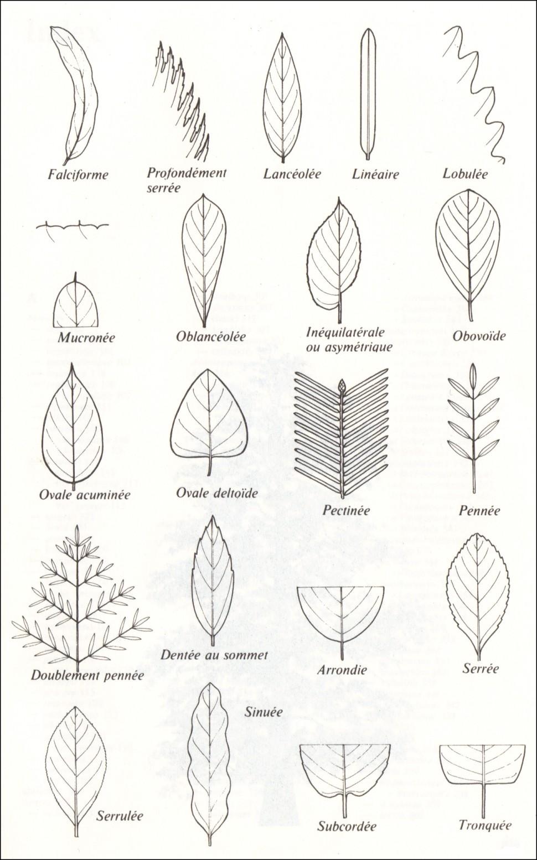 feuilles2970x1554.jpg