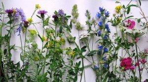 inventaire floristique été 2012 au Bois de Vincennes (Paul-Robert TAKACS)