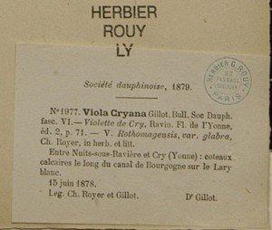 Etiquette d'herbier d'une centurie de Viola cryana dans l'herbier ROUY de la Faculté des Sciences de Lyon.
