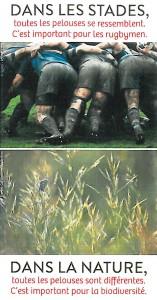 diversité floristique des pelouses