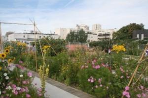 Jardin partagé sur le toit du gymnase, rue des Haies, Paris 20e (D.R.)