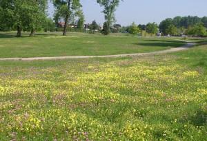 pelouse calaminaire au Parc Péru à Auby (photo Guillaume LEMOINE)